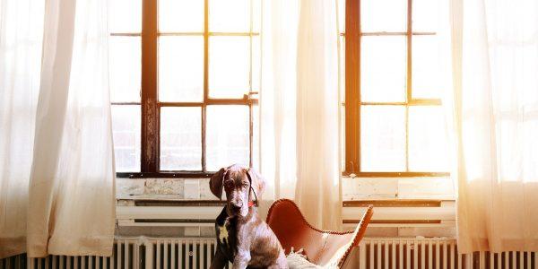 Una estación de trabajo completa necesita de alguno de los cojines para sillas de trabajo que te presentamos