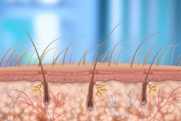 foliculos del pelo