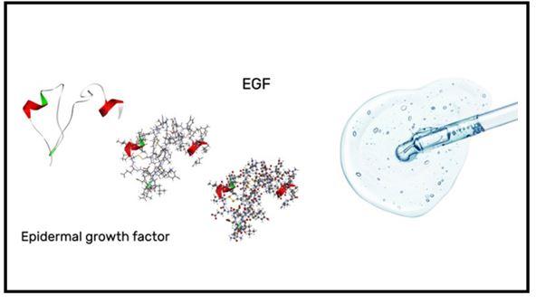 ¿Qué es el factor de crecimiento epidérmico?