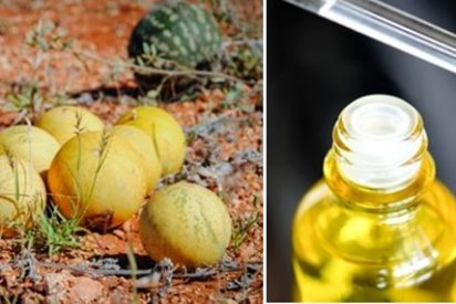 propiedades tiene el aceite de melón Kalahari