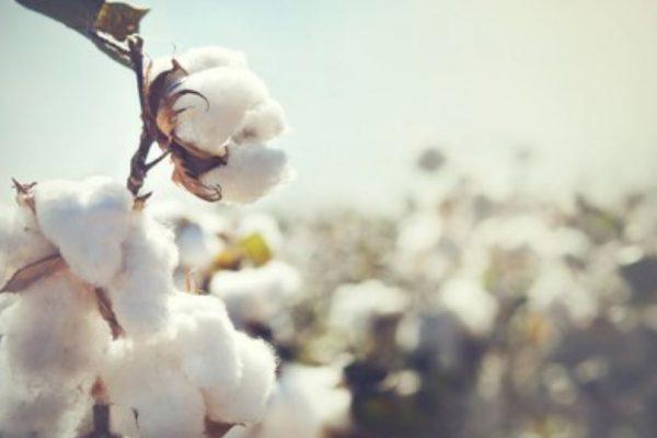 ropa de bebé de algodón orgánico