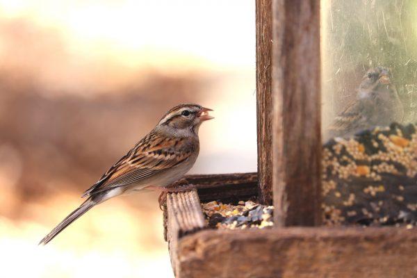 Alimentos para pájaros
