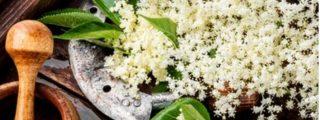 Propiedades de las flores de sauco