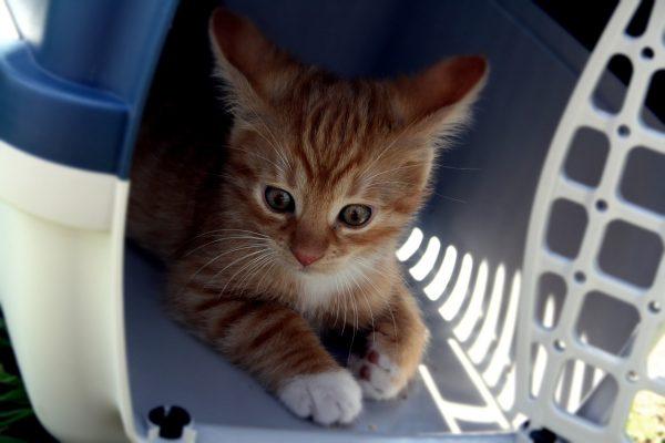 Transportines para macotas