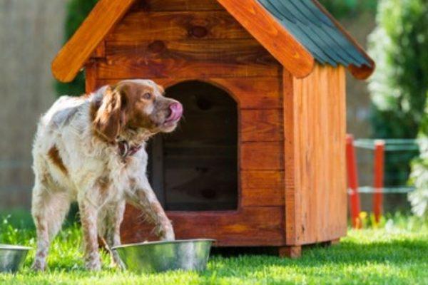 casetas para perros según razay tamaño