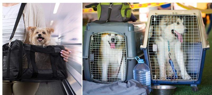 Mejores transportines para perros grandes y pequeños🐶
