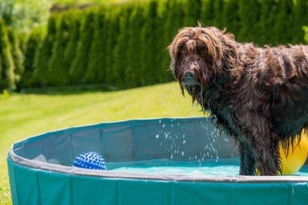Mejores piscinas para perros 2021