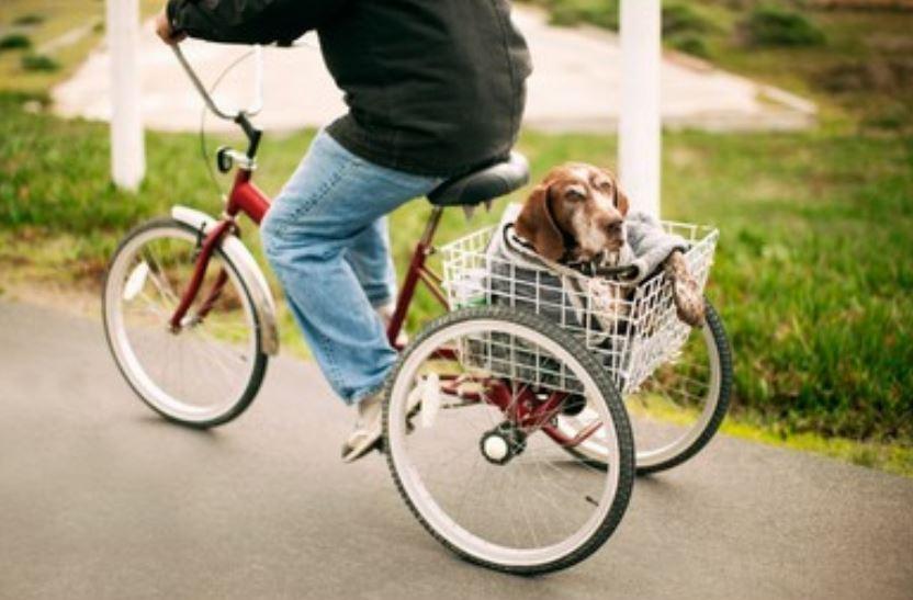 ¿Dónde comprar triciclos para adultos?