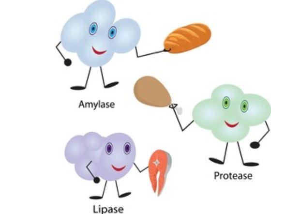 Suplementos de enzimas digestivas