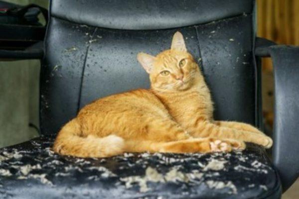 gato sentado en una silla