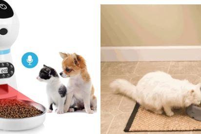¿Cuál es el mejor comedero automático para gatos?
