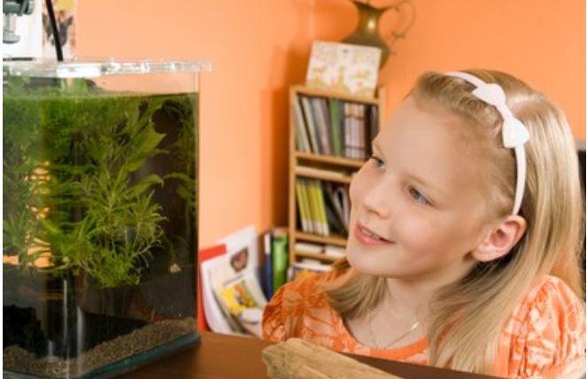 Mini acuarios con filtro más vendidos en Amazon