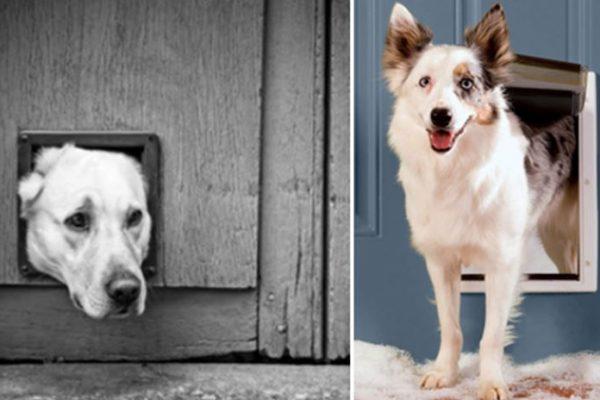 Mejores puertas para perros