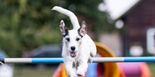 Agility para perros en casa mas vendidos en Amazon